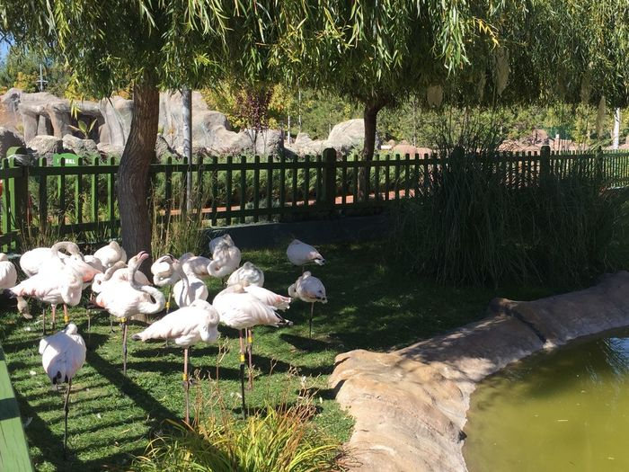 Flamingo Plant Tree Bird Vertebrate Group Of Animals Beauty In Nature No People Park First Eyeem Photo Inner Power
