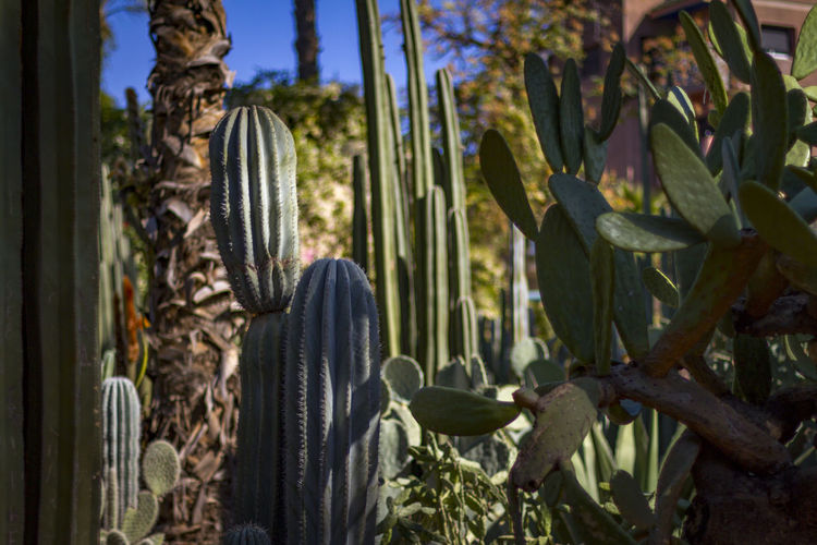 Tropical jungle, Marrakesh, Morocco Morocco Africa Beauty In Nature Cactus Close-up Day Focus On Foreground Forest Green Color Growth Jungle Land Leaf Marrakech Nature No People Outdoors Plant Plant Part Scenics - Nature Selective Focus Succulent Plant Sunlight Tranquility Tree
