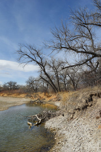 Trees leaning towards the Platte River in Wyoming Bare Tree Beauty In Nature Branch Day Nature Outdoors Sky South Of Lingle Wyoming Tree Water