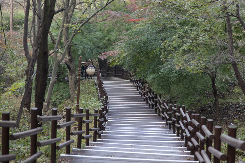 autumn in Maisan Mountain, Muan, Jeonbuk, South Korea Animal Themes Autumn🍁🍁🍁 Beauty In Nature Day Fall Forest Forest Photography Maisan Mountain Nature No People Outdoors Railing Stairway Tranquility Tree
