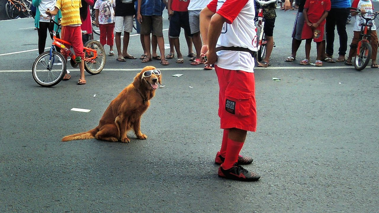 Low Section Of Man Performing With Dog On Street