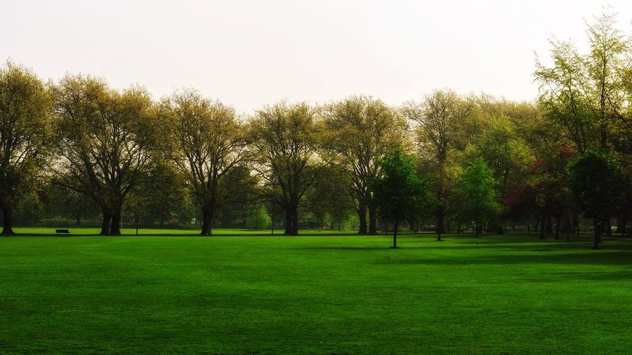 Green grass in the park Environment Tree Growth Green Color Beauty In Nature Nature Tranquility Grass Tranquil Scene No People Outdoors Clear Sky Field Landscape Park - Man Made Space Scenics Day Sky Freshness
