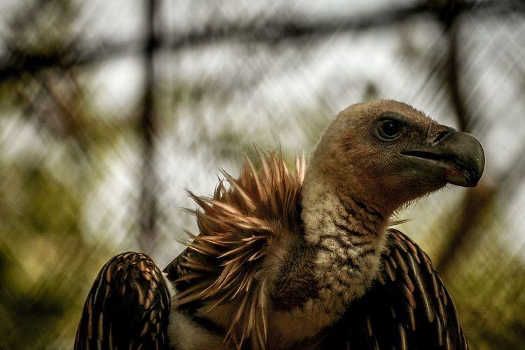 EyeEm Selects Portrait Travel Beauty Rupture Portrait Photography Assam Wildlife Wildlife Photography Close-up