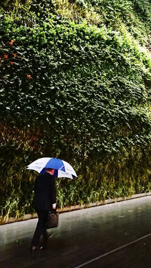 Protection Outdoors Wet Day Below Nature One Person City People Real People Sky Under Water Rain Umbrella Man Hurry Rush Hour Buisnessman Green