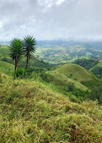 Costa Rica Ocean Mountains Tropical Climate Plant Growth Landscape Sky Beauty In Nature Cloud - Sky Environment Scenics - Nature Tranquil Scene Tree Tranquility Green Color Rural Scene Agriculture Field Outdoors Nature