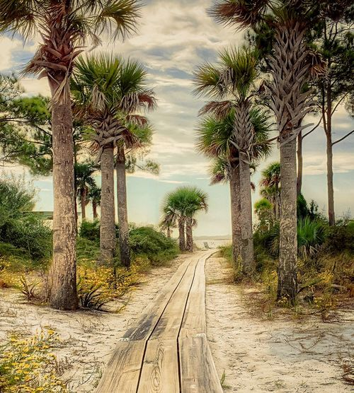 This way to the beach. Beach Clear Sky Composition Leading Narrow Palm Tree Perspective Summer Sun The Way Forward Tranquil Scene Tranquility Tree Tropical Climate Vacations Water