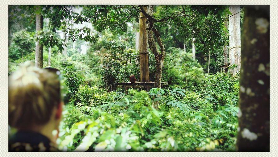 Holiday Orangutan Sandakan Forest Park