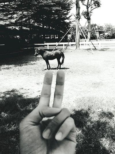 Line:gumball3000 FB:gumball3000@kimo.com Horse Hand Ya! Kaoshiung