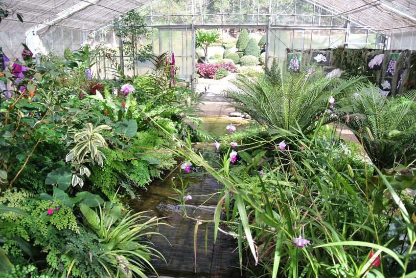 Growth Plant Greenhouse Flower Nature Beauty In Nature Plant Nursery Day No People Agriculture Outdoors Botanical Garden Flower Head