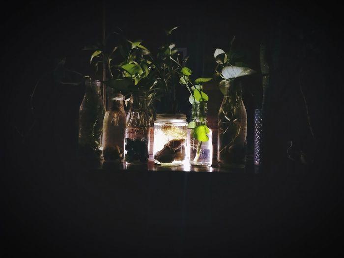 indoor plants Black Background Greenhouse Tree