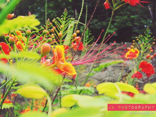 Capture The Moment Taking Photos Flowers,Plants & Garden Red