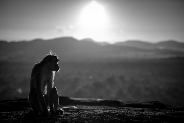 Monkey sitting on mountain