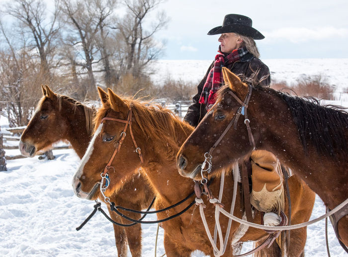 Feb 2019 - Music Meadows Ranch Colorado Cowgirl Cowgirl Up Cowboy Cowboy Hat Working Animal Horse Themes Winter Ranch Life Domestic Animals Livestock Snow Animal Themes Cold Temperature Snowing Outdoors One Person Mature Adult Day Clothing Adult Warm Clothing Domestic Paddock Mammal Herbivorous Horse