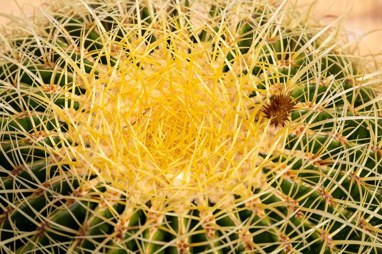 Cactus near