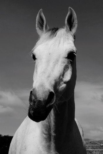 Portrait Of Horse Against Sky