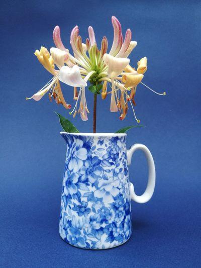 Close-up of white flower vase against blue background