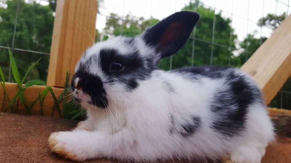 Pets Domestic Animals One Animal Close-up Rabbit Portrait Pet Pet Photography  Rabbit Bunny  Petsofeyeem Kit