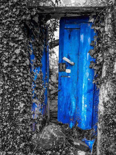 Blue Door Full