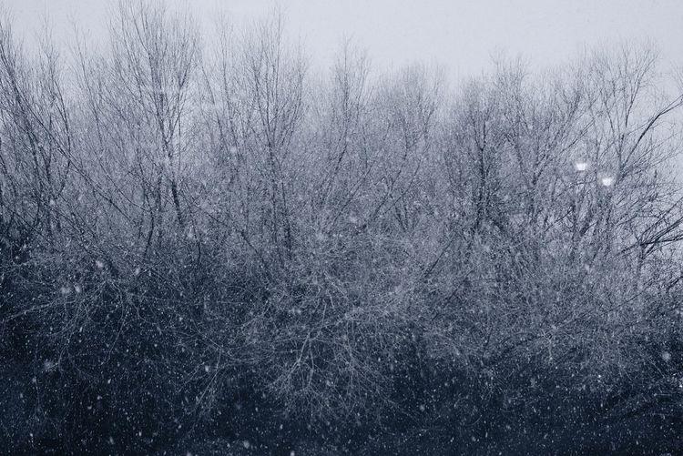 Bare Tree Cold