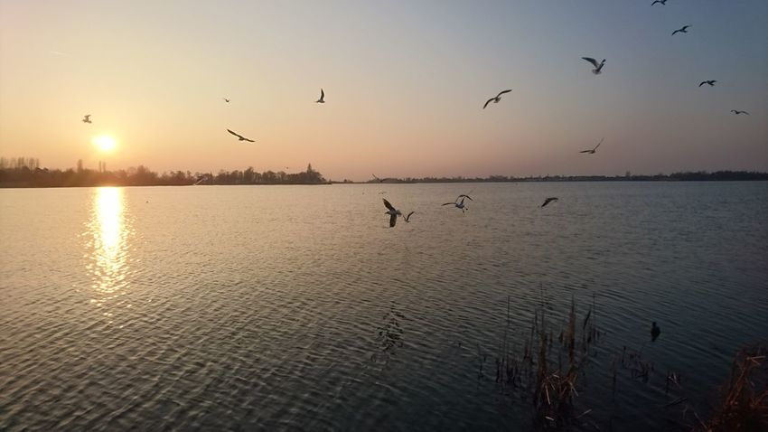 Sunset over Lake Langeraar Lake Langeraar Nieuwkoop Zuid Holland Sunset Bird Flying Silhouette Reflection Sun Nature Sky Water Sunlight Outdoors Tranquility