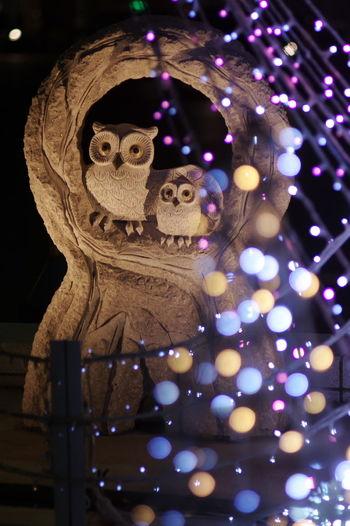 名古屋駅近辺をプラプラしていたら、イルミネーションで飾られたフクロウのオブジェを見つけました。イルミは名古屋モード学園の学生さんがデザインしたもののようですが・・・フクロウの添え物として撮ってしまいました。(笑) Owl Owl Art Object Illumination フクロウ オブジェ イルミネーション 玉ボケ 玉ボケ部