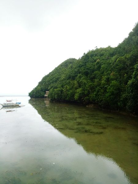 Water Tranquil Scene Tree Tranquility Scenics Nature No People Outdoors Sea Beauty In Nature Landscape Plant Beach Sky Vacations Day Archipelago Tree Area Lost In The Landscape Tinagong Dagat Sipalay City Philippines