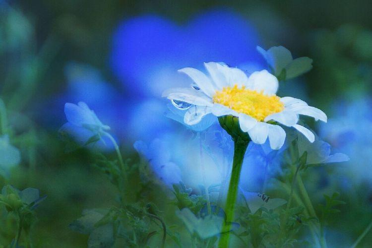雨の休日も楽しめました💙また明日からもよろしくねー🙌🙌 多重露出 しずくふぇち Drop Rainy Day Flower Flowers Low Angle View Relaxing Time Enjoying Life From My Point Of View Love_blue 乙女部 わちゃわちゃ 黄昏隊 Blue Heart 💙 Happy Moments Lovely Nature Pure Heart ボケ味ふぇち Bokeh Bokeh Love Atmosphere Macro Kagoshima