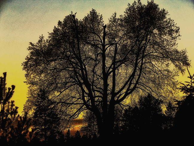 Tree Sandpoint Idaho Trees