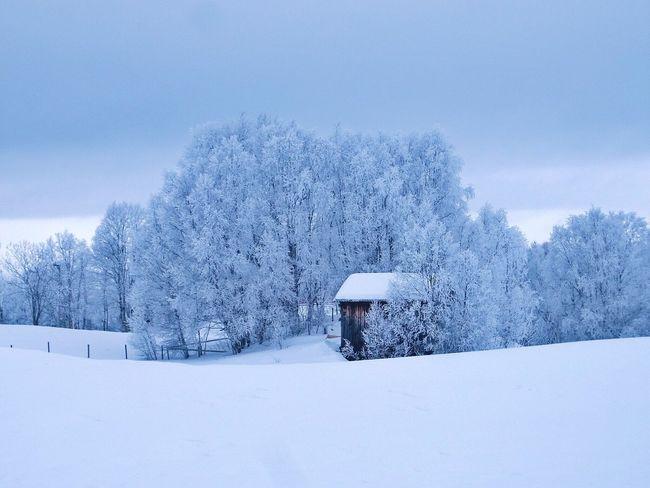 Winter scene Wintertime Landscape Winterwonderland Snow Winter Cold Temperature Weather White Color Nature Beauty In Nature