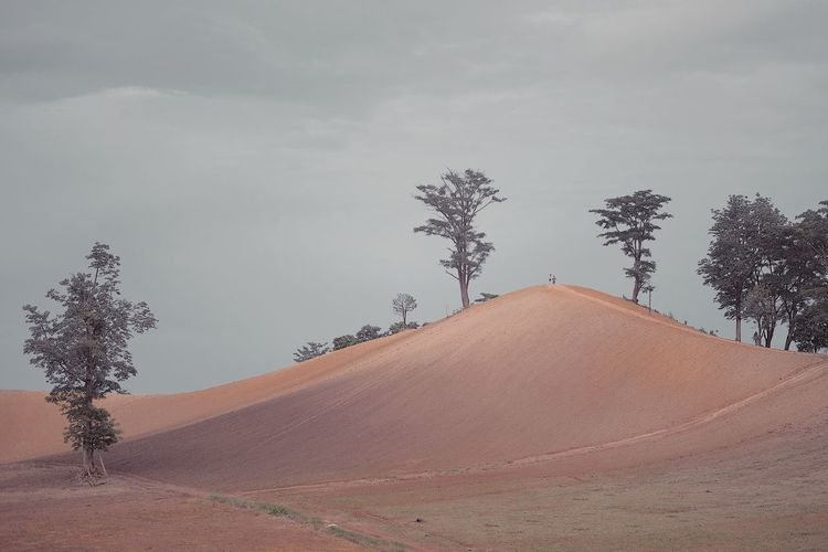 Arid Climate Beauty In Nature Climate Cloud - Sky Day Direction Environment Growth Land Landscape Nature No People Non-urban Scene Outdoors Plant Road Scenics - Nature Sky Tranquil Scene Tranquility Tree