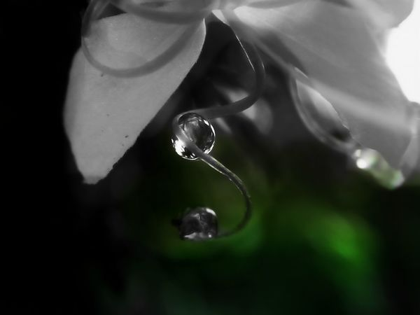 Dreams Expression Silence Of Nature Togetherness My World Droplet Water Flower Head Macro Kerala Close-up Nature Day Outdoors Fragility Beauty In Nature