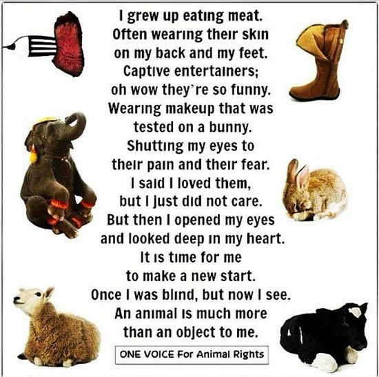 GoVegan Vegan Animalsmatter FriendsNOTfood