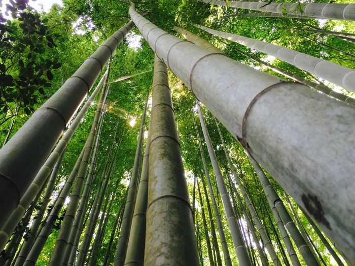 Bamboo Japan Japanese Temple