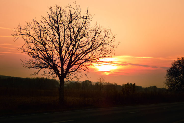 Silhouette bare tree by road against sky during sunset