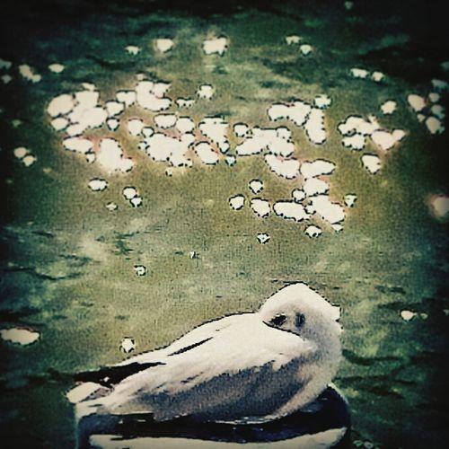 Bird La Seine