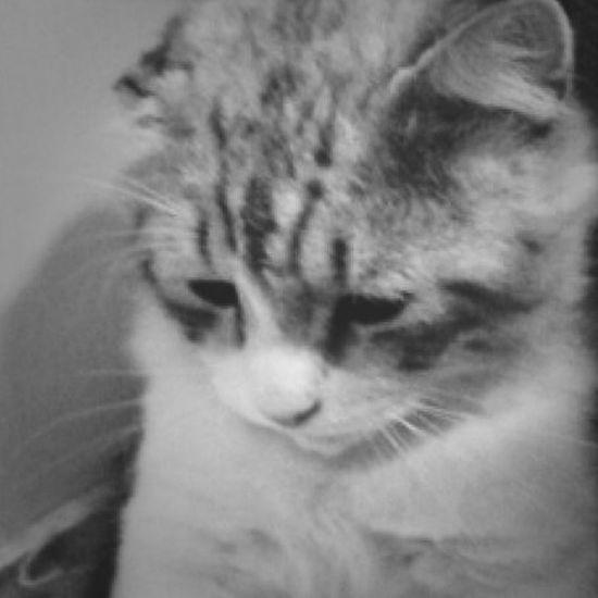 Bad Mood! I'm Not OK I'm Sad I 'm Mss You