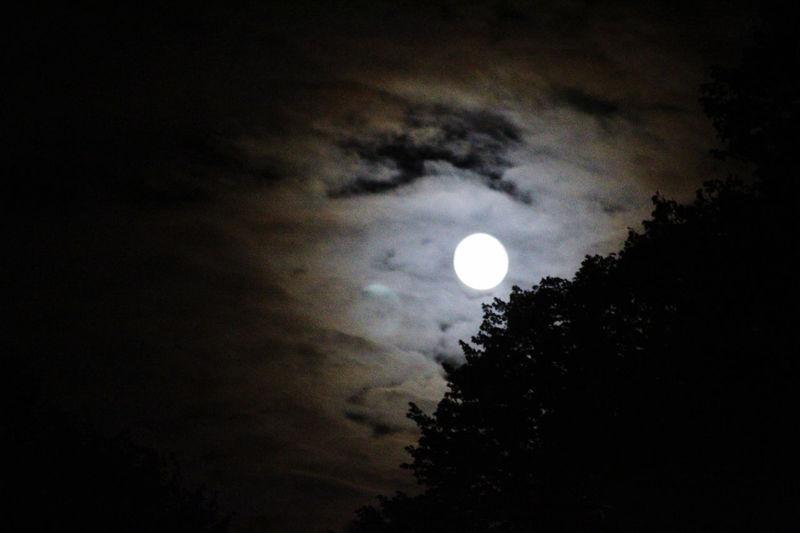 Moonlight Best