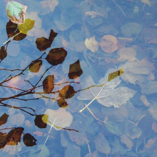 Photography Water Lake High Angle View Leaves In Water Floating Leaf Reflection Branch And Leaf Reflection Nature Beauty In Nature No People Autumn