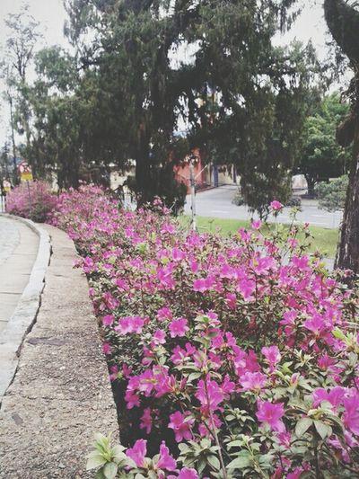 que nossos caminhos sejam cercados de flores...