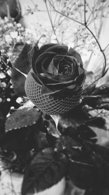 Rose🌹 Black & White Romantic❤ Gift Of Nature Love In The Air