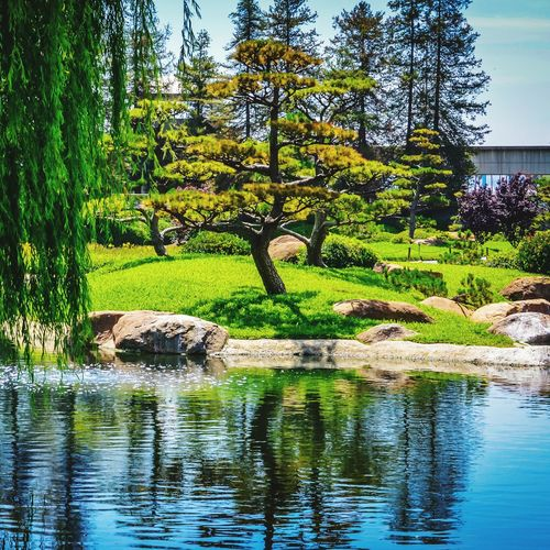 The Japanese Garden Hidden Treasure Tranquility Chillaxing Serenity Infinite Beauty