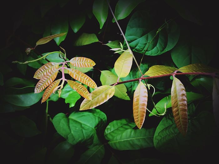 Plant Part Leaf Plant Close-up Nature No People Green Color Animal Themes One Animal Insect Animal Invertebrate Beauty In Nature Animal Wildlife Growth Animals In The Wild Day Outdoors Sunlight Leaves