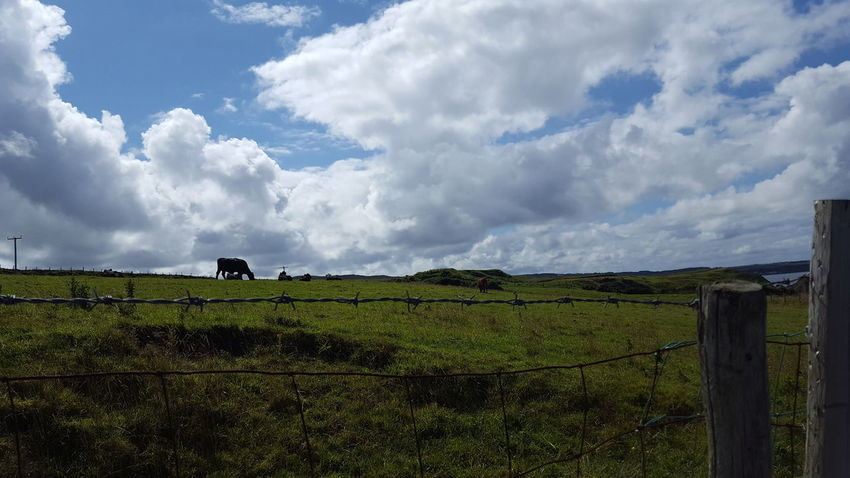 Ballintoy Nothern Ireland  Cloud - Sky Green Grass Grass Cow Beauty In Nature No People Rural Scene Agriculture Field Wooden Post Protection Farm Sky Barbed Wire