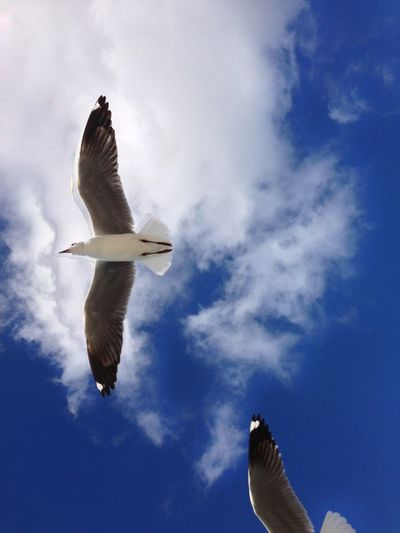 Directly Below Shot Of Seagull Flying In Sky