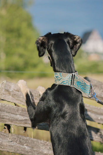Close-up of dog leaning railing