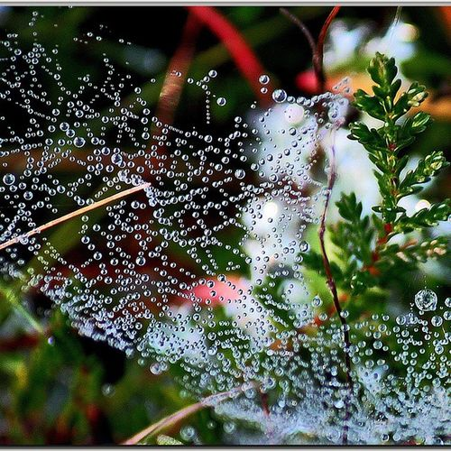 Spidernet Nature Nature_pd Watercollars