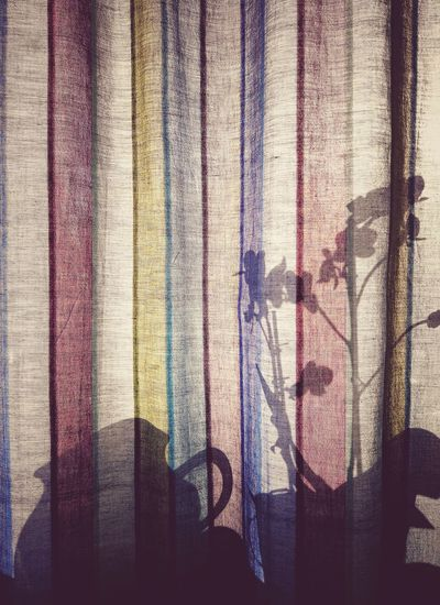 Backgrounds Indoors  Window Textile Day Textured  No People Flower Shadow Shadows & Lights Shadows And Silhouettes Siluet Siluette Calm Beauty Sunlight Summer Home Home Interior Curtain Curtains