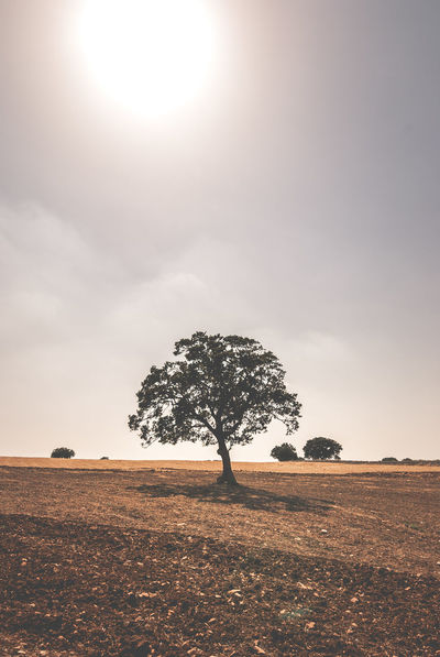 40°C Drought Global Warming Hot Day Nikon Puglia Beauty In Nature Climate Change Day Field Heat Heat - Temperature Landscape Lone Nature No People Outdoors Quercia Quercus Rural Scene Scenics Sky Sun Tranquility Tree The Week On EyeEm