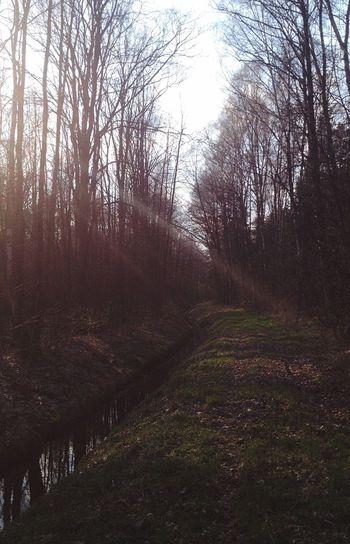 Las Słońce Wiosna First Eyeem Photo Forest Spring Sun