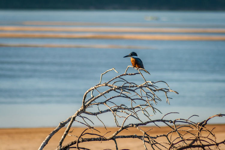 Bird perching on a sea